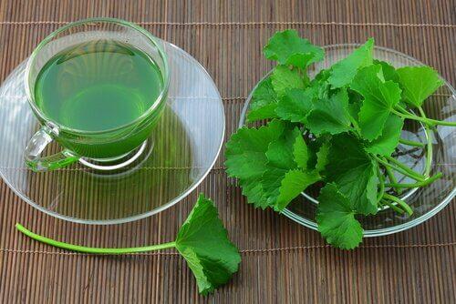 Entgiftende Tees mit Sellerie