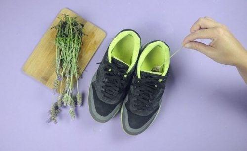 Lavendel gegen schlechten Schuhgeruch