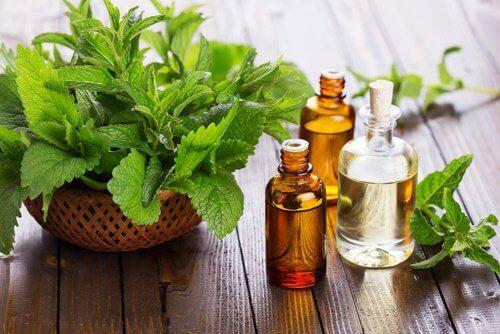 Heilmittel gegen Knieschmerzen mit Minz- und Eukalyptusöl