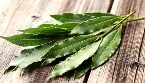 Tipps gegen Allergien: Eukalyptus