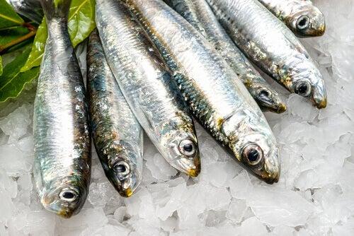 Fettverbrennende Lebensmittel sind zum Beispiel Fische.
