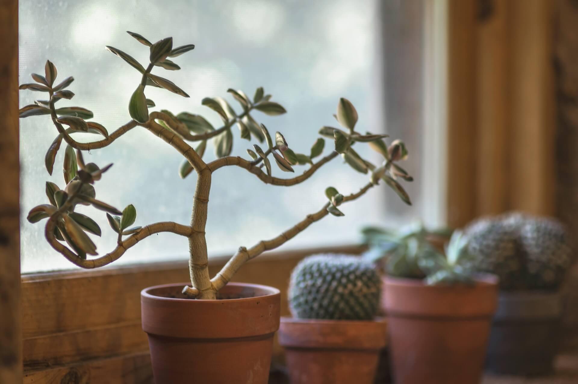 Wohnen mit Pflanzen – 7 gute Gründe