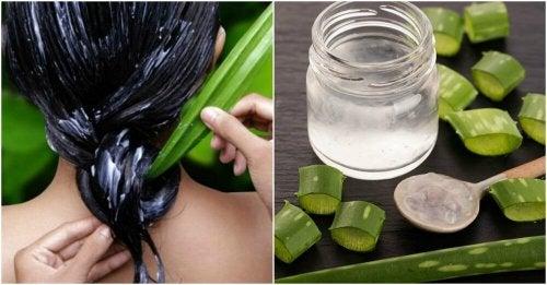 Aloe Vera für glänzendes und seidiges Haar