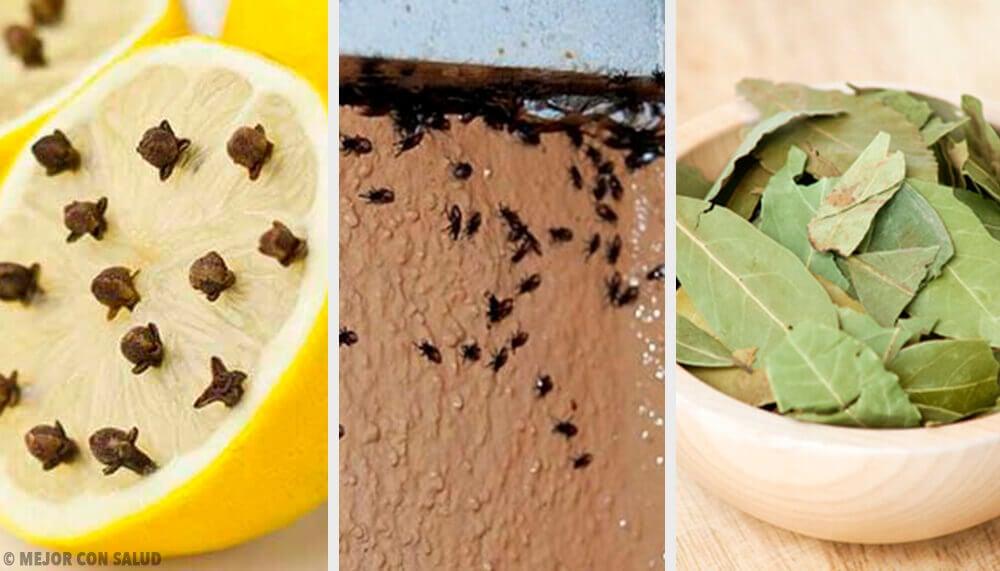 Natürliche Mittel zur Insektenvernichtung