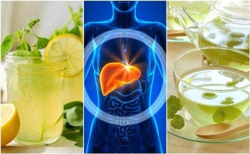 Mit diesen 5 Getränken die Leber im Schlaf entgiften