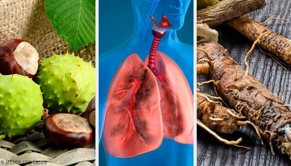 4 Hausmittel zur Stärkung der Lunge