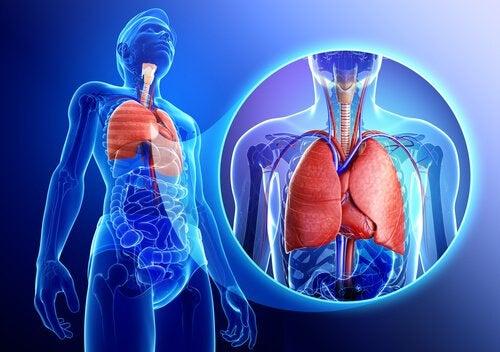 Lorbeerblätter für das Atmungssystem