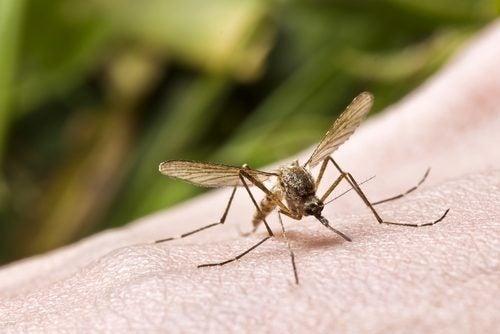 Einsatzmöglichkeiten für Wick VapoRub gegen Insekten