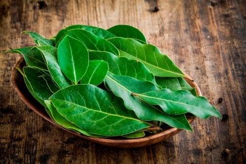 Hausmittel mit schleimlösenden Pflanzen wie Lorbeer