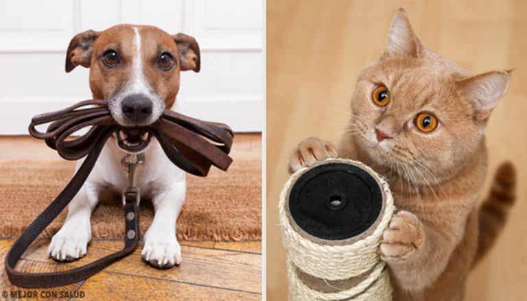 Welche Vorteile haben Haustiere für die Gesundheit?