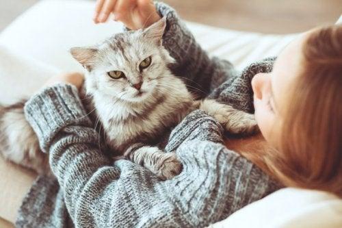 Katzen als Haustiere für die Gesundheit