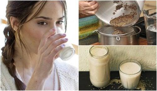Gesundheitsfördernde Kanariengras-Milch selbst herstellen
