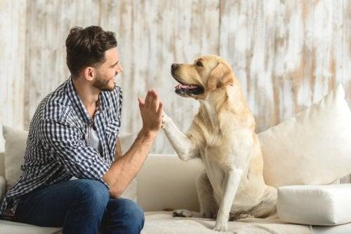 Haustiere für die Gesundheit