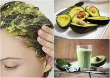 6 großartige Naturheilmittel mit Avocado