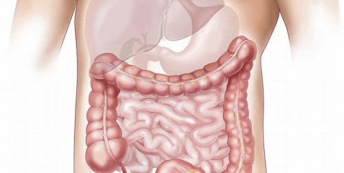 Was passiert bei einer gestörten Darmflora?