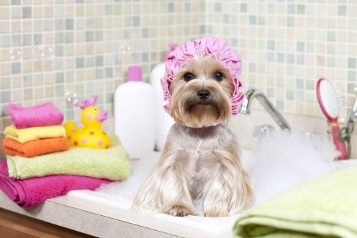 Hund in der Badewanne in einem ordentlichen Haushalt