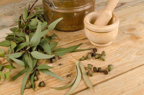 Benutze Eukalyptus gegen Läuse