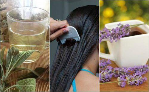 5 pflanzliche Heilmittel gegen Läuse