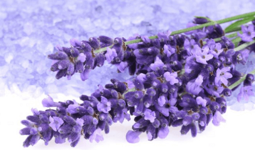 Mit Lavendel den Blutdruck senken