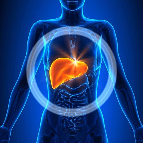 Symptome einer krankhaft veränderten Leber