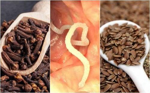 Darmparasiten loswerden mit Gewürznelken und Leinsamen
