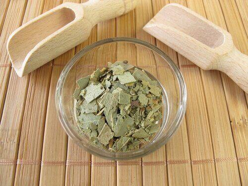 natürliche Heilmittel um einen trockenen Hals zu beruhigen Eukalyptus