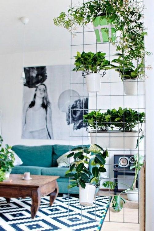 Natürlicher Raumteiler mit Pflanzen