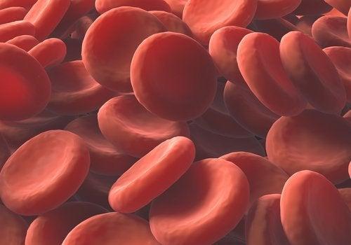 Blutplättchenanzahl natürlich erhöhen – 4 Rezepte