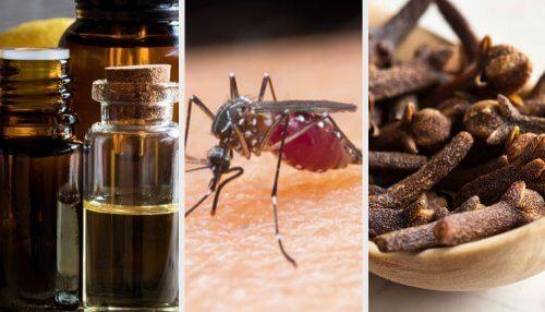 10 Düfte, die Mücken vertreiben