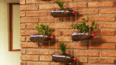 Lerne einen hängenden Garten zu bauen - Design