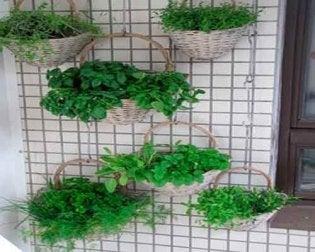 Lerne einen hängenden Garten zu bauen - Umweltbedingungen