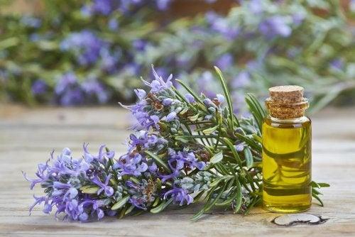 Pflegende Öle für die Haare - Rosmarinöl