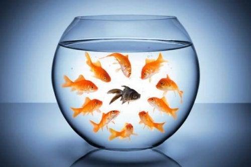 Toxische Wörter und Fische im Glas