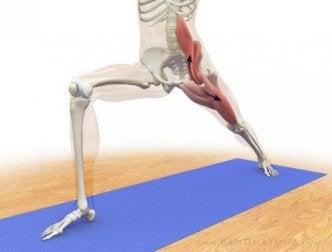 Diese Yogaübungen helfen, den Psoas major zu unterstützen.