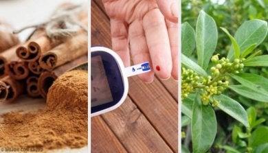 Arzneipflanzen gegen Diabetes