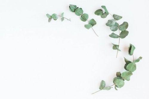 Eukalyptus und andere Arzneipflanzen gegen Diabetes