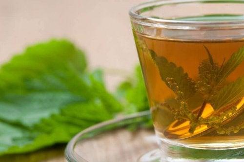 Brennnessel zur Linderung von Nackenschmerzen