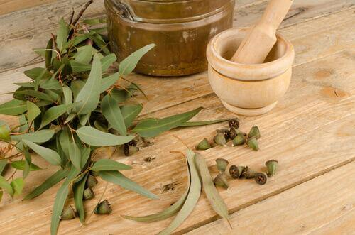Heilmittel gegen Allergien Eukalyptus