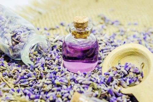 Herstellung und Anwendung von ätherischem Lavendelöl