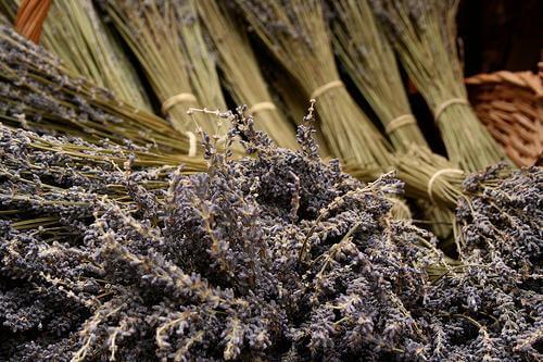 Lavendel für Lavendelöl