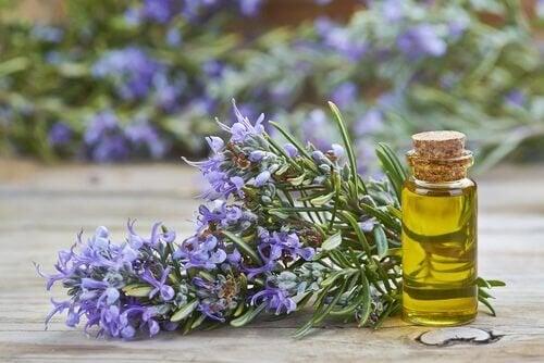 ätherische Öle für die Kosmetik - Rosmarin