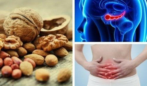 Warum Nüsse gut für den Magen sind