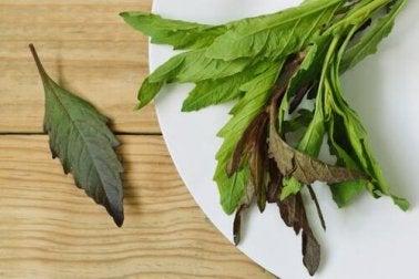 Epazote-Blätter, mexikanischer Drüsengänsefuß, verdauungsfördernder Kräutertee aus Epazote