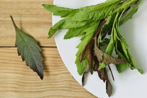 Blätter für Tee aus mexikanischem Drüsengänsefuß zur Verdauungsförderung