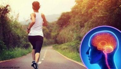 zu wenig Sport verändert das Gehirn