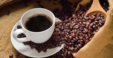 Kaffeebohnen - Fakten über Kaffee