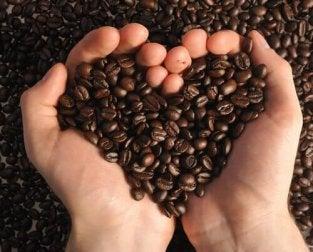 Bohnen - Fakten über Kaffee