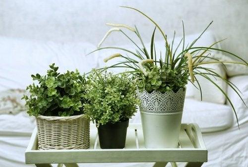 5 pflegeleichte Pflanzen die blühen!