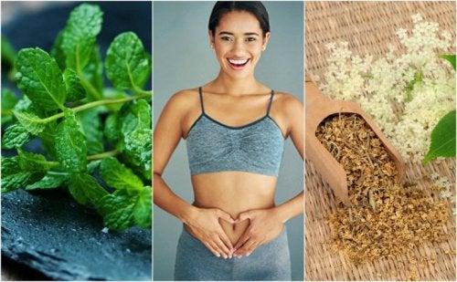 Pflege deine Verdauung mit diesen 6 Heilpflanzen!