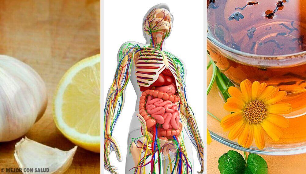 6 natürliche Mittel zur Entgiftung des Lymphsystems